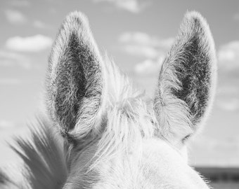 Horse Ears, Close Up Equine Photograph in Black and White