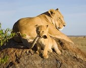 LION BABY PLAYING Photo P...