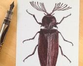 Beetle postcard