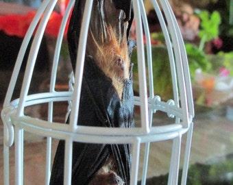 My Pet Bat in White Metal Cage - SHIP FREE 3