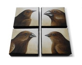 Darwin finch paintings, adaptive radiation, 4x4 square canvas, set of four