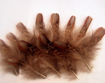 Natural Tragopan  Pheasant  feathers Gray LG 12