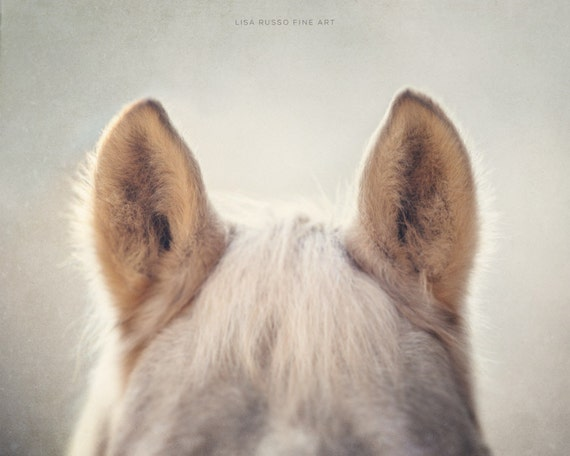 Horse Art, Horse Print or Canvas Wrap, Whimsical Horse Photo, Animal Photography, Nursery Decor, Fuzzy Horse Ears Cream, Beige, Tan.