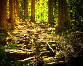 Peaceful forest,sunbeam on ferns,cool,Nature Photography,path in woods,woodland,fresh,forest floor,mossy,nature home decor,forest green,zen