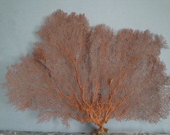 "18"" x 14"" Large Natural Red Color Sea Fan Seashells Reef Coral"
