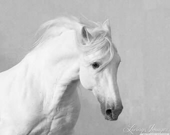 The White Stallion Runs By - Fine Art Horse Photograph - Horse - Lusitano - Fine Art Print