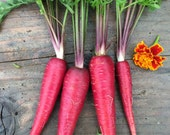 FREE SHIPPING Organic Heirloom Cosmic Purple Carrot Seeds Best Seller