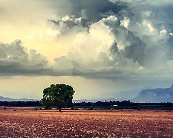 Old Tree clouds with superstition mountain