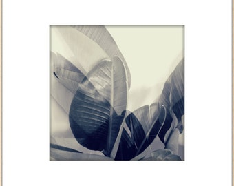 Palm Leaves Photograph, Mid Century Style, Botanical, Muted B/W, Modern Wall Art, Jungalow, California Palms, Minimal Garden, Modern Home
