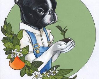 Original Illustration / Boston Terrier / framed
