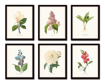 Botanical Garden Print Set No. 17, Redoute Botanical Prints, Giclee, Art Print, Antique Botanical Prints, Flower Prints, Wall Art, Print Set