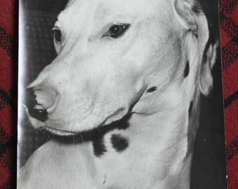 vintage black and white photograph of a dog