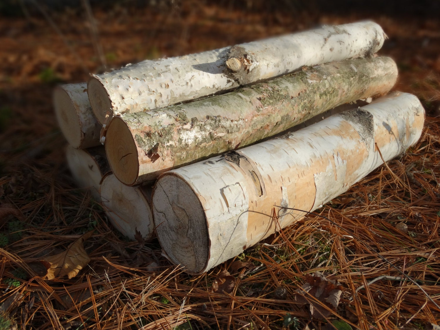 White Birch Logs 6 White Birch Logs Rustic Craft Supply