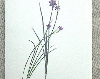 Native Wildflower Blue-eyed Grass Blank Note Card