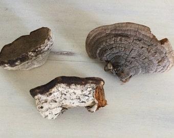 Natural Dried Tree Fungi Craft Supplies Natural Supplies Three Pieces
