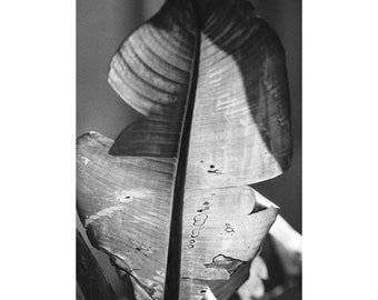 Seasons / Darkroom Print