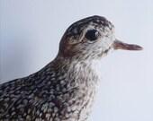 RESERVED Vintage Taxidermy Bird  Songbird