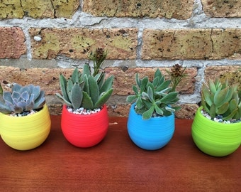 POP OF COLOR Succulent planter pots - A Modern Fun Birthday or Hostess gift