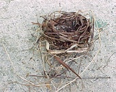 Real Bird's Nest - Medium size Grape Vine & Twig House for Feathered Friends and Eggs - Genuine Bird Home - Found Supply - Natural Architect