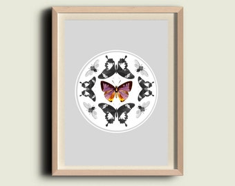 Butterflies and Moths Print Vintage- Entomolygy Illustration - Wall Hanging
