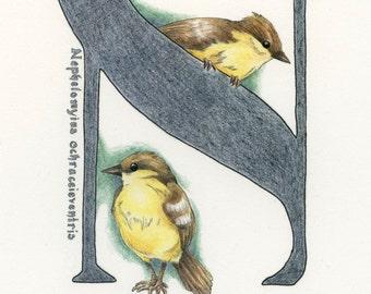 Avian Alphabet N