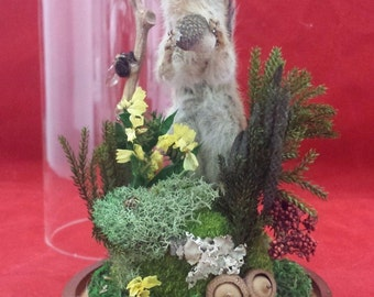Antique Victorian Inspired Taxidermy Chipmunk Glass Dome Display