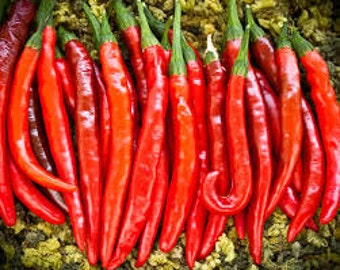 HOT CAYENNE PEPPER Seeds 15 Fresh seed ready to plant in your garden