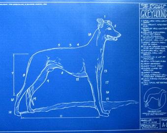 "Blueprint Drawing of a Greyhound #2 - 18"" x 24"""