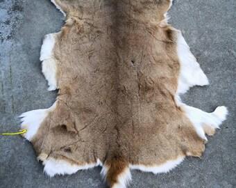 Tanned Whitetail Deer Pelt