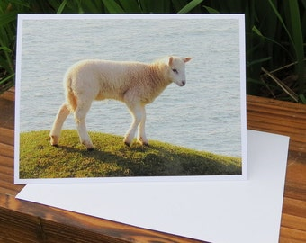Sheep.  A card featuring an original photograph.  Left blank inside for your own message.