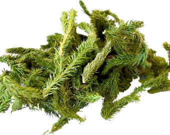 Club Moss tea, Lycopodium Clavatum tea, herbal tea, loose tea, natural, organic, bio, Vegetable Sulphur, Wolf's Claw tea