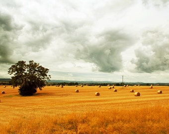Shropshire Bales, Countryside, Photography Print - 12x8 inches