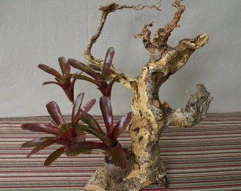 Driftwood art planter with live bromeliads