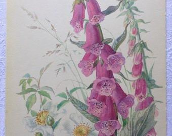 Vintage Botanical Book Page - Fox-Glove - Trailing Rose - June - Summer - Country Diary of an Edwardian Lady - Edith Holden