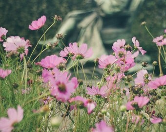 Flower Photography, Paris Photography, Jardin des Plantes, Cosmos, Statue, French Decor, Large Wall Art, Living Room Wall Art, Garden Art