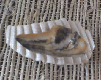 Ridged shell with black and beige shell on top pendant pin