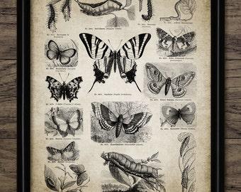 Vintage Butterfly Print - Antique German Encyclopedia Bookplate Illustration - Entomology Digital Art - Single Print #390 - INSTANT DOWNLOAD