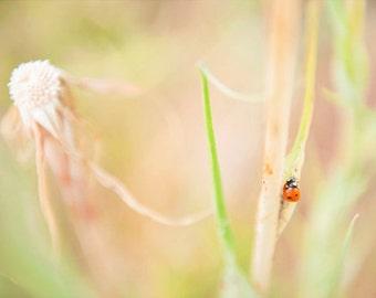 Ladybug II - Mounted Photographic Print