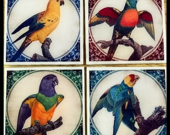 "4"" x 4"" Parrot Magnets (Set of 4) - Bird Magnets - Refrigerator Magnets - Home Decor"