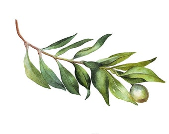 Olive Branch watercolor painting original