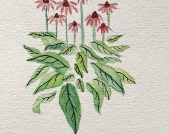 Original Watercolor Painting Drawing Illustration of Echinacea Flower