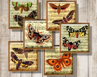 Printable Butterflies Moths Music Paper Background, Digital Collage Sheet, 1 inch Squares, 20 mm, 25 mm, 32 mm Images, Instant Download, a5