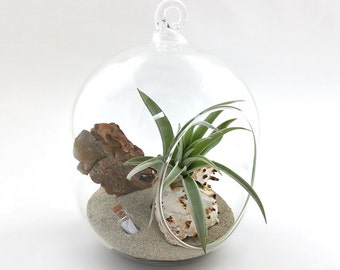 "3.25"" oval message in a bottle globe air plant / tillandsia terrarium kit"