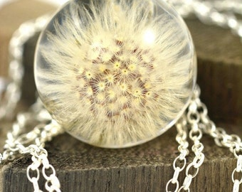 Pendant with real dandelion of hawkweed oxtongue (Picris hieracioides) in the resin ball on a silver chain. Sphere 2,5 cm, chain 45 cm.