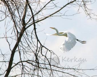 Flight Of An Egret