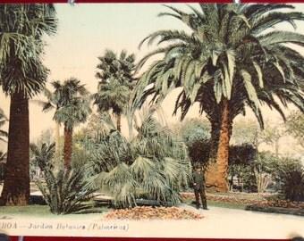 Original Colour Post Card From Portugal Entitled: LISBOA - Jardim Botanico (Palmerias)