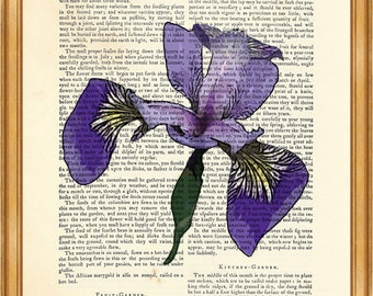 Beautiful Iris DICTIONARY ART PRINT on Vintage Dictionary Page 8'' x 10'' from up-cycled book