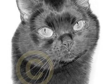 Black Cat pencil drawing print - A4 size - artwork signed by artist Gary Tymon - Ltd Ed 50 prints only - pencil portrait