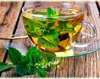 Organic Sweet Mint Plant For Tea Or Cooking Fresh From The Garden With Roots For Easy Planting