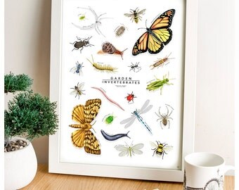 Garden Insects, Invertebrates Print, Bugs Chart, Nature Wall Art